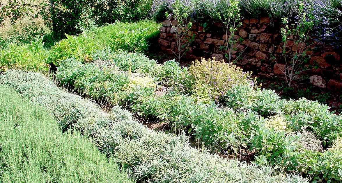 Kräutergarten 4 - Kopie